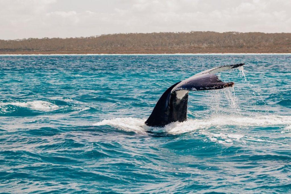 Walvissen spotten in Autstralie