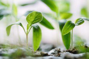 Blog laten groeien